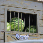 ...ein Melonengefangenentransport!