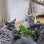 Felicitas und Fenja, die schweizer Mädls