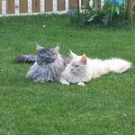 Merlin und Janosch lieben sich
