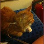 Fitus aus dem F-Wurf fährt gerne mit dem Zug