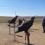 Adler in der Mongolei