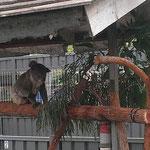 Mittagssnack im Koala Hospital Port Maquairie