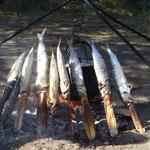 Mittagsessen - Stockfisch