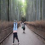 den Bamboo-Pfad mal anders laufen