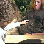 Wombat streicheln :-)