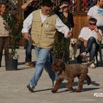 10/04/2011 - EXPO' NAZ. SIENA - OTTO proprietario Caira Fabrizio - CAC & BOB