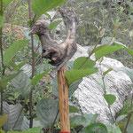 garuda wood deity found