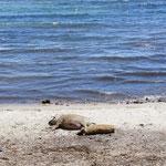 Bronzette sur la plage !