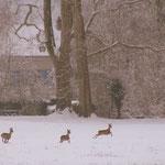 Bambi et ses amis - Château de Condé - Condé en Brie champenoise de Picardie