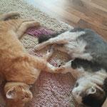 Beste Katzenfreunde Jimmy und Stritzi