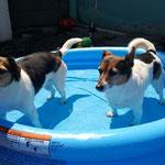 Ein kühles Bad bei dieser Hitze