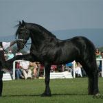 Spanischer Gruss am grossen Pferdefest in Schlosshof