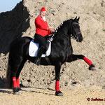 Arena Nova, Apropos Pferd 2012