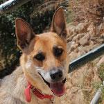 8079 Bonita, 06/2014-07/2014, se ha muerto sin motivo, fue felice - no podemos entender, fue una perra muy buena