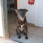 Molly, lunes 16/12/2013, lamentamos comunicar que Molly, una de nuestras abuelitas del albergue, ha fallecido por muerte natural.