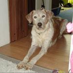 Rotja (Ronja), estaba muchos anos con nosotros, ha encontrado una casa en Alemania, se a muerto 15 de marzo 2013