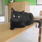 Wolfi - se ha muerto en el otoño 2013. ha tenido solo 3 patas y diabetis, pero tambien pif. ha disfrutando su vida en la clinica.