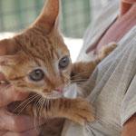 una de muchos gatitos abandonado sin madre, el albergue sin madre es un sitio malo para gatitos