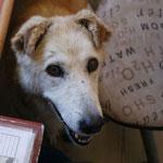 3268 Gina,  2007-2014, se a muerto con 14 años sin encontrar una familia, gracias a Gabi