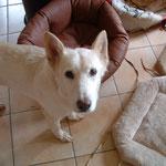 Britta/Bonny - ha tenido cancer, adoptado en un estado malo, para una vida buena los ultimos meses