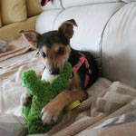 Tina (ultima cachorra de Sagunta) 05/2016