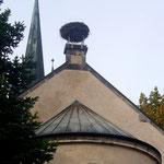 Nest in Wahrenholz (Foto: Volkmann)
