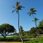 2011: Hawaii