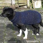Hundepullover, getragen von Hund Noah aus dem rumänischen Tierschutz