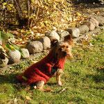 Hundepullover aus Mohair mit Synthetikanteil