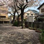 4月6日 いつしか桜は散り始め・・・