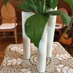 葉の先端には巻きひげがあり、周囲の植物などに巻き付いて大きく成長するそうです。