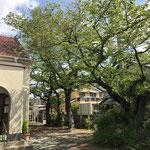 玄関前(桜が4本)