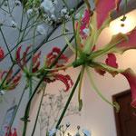 つぼみが下向きについて、花が開くに従って花弁が上に反り返り、波打ちも大きくなるのだそうです。