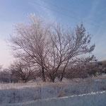 Зимний этюд 1