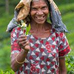Besuch einer Teefabrik & Teeplantage