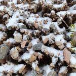 Kammeis (mit leichter Schneebedeckung)