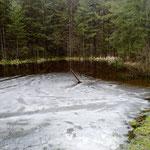 Waldtümpel, z. T. noch mit Eis bedeckt