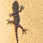 Mister Gecko...mein Mitbewohner, der andere hatte sich das Bad als Heimat ausgesucht.