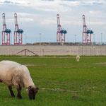 """Die Kräne des """"JadeWeserPort"""" einem Tiefwasserhafen mit Containerterminal in Wilhelmshaven"""