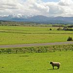 Schottland wie aus dem Bilderbuch. Im Hintergrund erheben sich die schneebedeckten Grampian Mountains