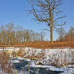Natur und Hochwasserschutz im Einklang im Auenzentrum Neuburg