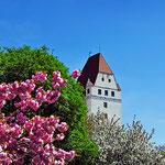 April - Frühling in Ingolstadt (Neues Schloß)