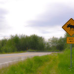 Irgendwie mag ich diese Schilder! Auf dem Weg zwischen Chena und Fairbanks. // I like those kind of signs! On the road between Chena and Fairbanks.