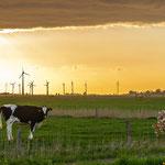 Windparks wohin man schaut...auf dem Weg von Wittmund nach Carolinensiel (B 461)