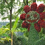 Wer am Bodensee Urlaub macht kommt um einen Besuch auf der Blumeninsel Mainau nicht herum.