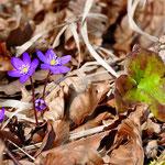 März - Frühlingserwachen in der Natur westlich von Neuburg an der Donau