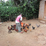 Viele Schulen in Tansania produzieren einen Teil der benötigten Lebensmittel selbst. Hier der Koch der Schule beim Füttern der Hühner.