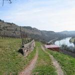Der Weg zurück führt durch die Weingärten ...