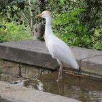Ein Vogel im Jardin de Laribal im Park Montjuic.