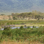 "Flusspferde im ""Hippopool"" des Ngorongorokraters."